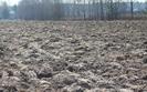 Ziemia rolna w Polsce drożeje, ale powoli. Ograniczenia w obrocie mają przełożenie na ceny
