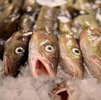 Chude dorsze. Rybacy biją na alarm, eksperci uspokajają