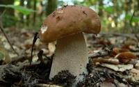 Sadzenie grzybów