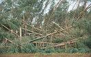 To największa klęska w historii Lasów Państwowych. Zniszczone jest 44,6 tys. hektarów lasów