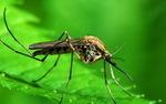 Oporność na leki skojarzone zagraża wysiłkom na rzecz wyeliminowania malarii