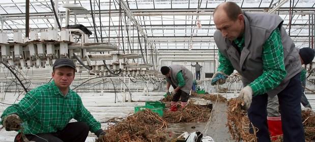 Do niedawna Ukraińców spotkać można było tylko w fabrykach czy budowach. Ostatnio coraz częściej zarabiają w usługach.