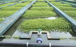 Wirtualny sposób na dzielenie się innowacjami w uzdatnianiu wody