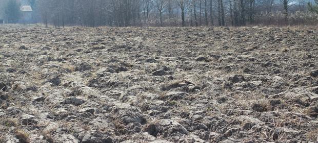 Ziemia rolna w Polsce podrożała o 5,8 proc. w ciagu roku.