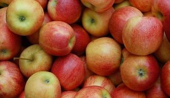 60 ton jabłek na śmietniku. Rosjanie je wyrzucili, bo były z Polski