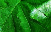 Biogaz- praktyczne aspekty inwestycji w zieloną energię