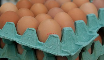 Będzie elektroniczna baza cen jajek. Mobilizacja branży