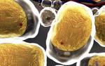 Wyznaczanie trendów w nauce: Wysokie zróżnicowanie bakterii ma wpływ na otyłość