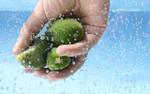 Zacieśnianie współpracy w zakresie bezpieczeństwa żywności w Europie