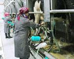 Ostatnia chwila na wniosek o dotacje do mleka
